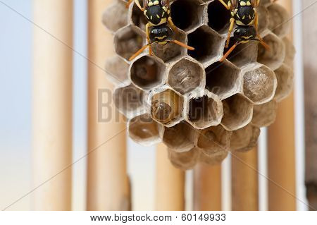 In wasp larvae brood cells macro photography
