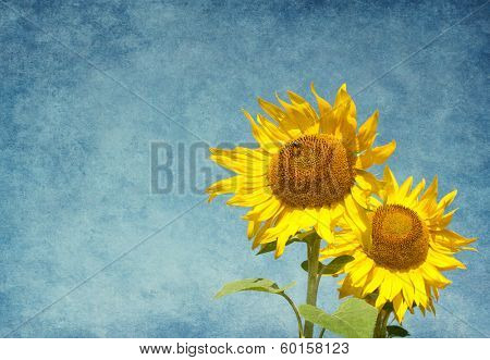 Two sunflowers against the blue sky.  Added paper texture. Focus on the left flower.