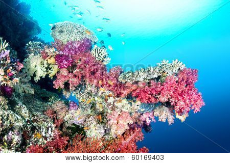 A beautiful color encrusted ledge on a tropical reef in Fiji hosts a multitude of colorful soft and hard corals in clear water with a big sun ball at the surface.
