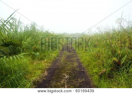 A remote, countryside dirt road lined with green foliage during a foggy day