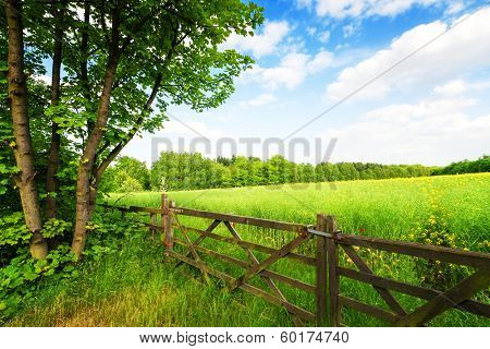 Fence in the green field under blue sky