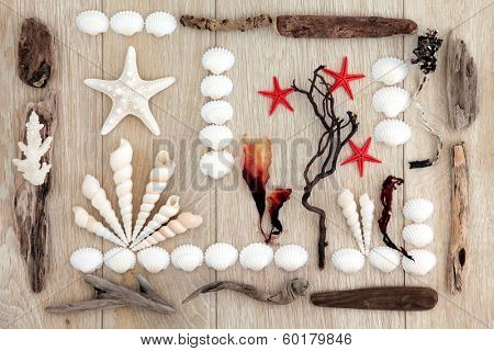 Sea shell, driftwood and seaweed abstract design over old oak background.