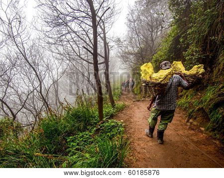 Sulfur Miner Carrying Baskets Loaded with Solid Sulfur at Kawah Ijen Volcano