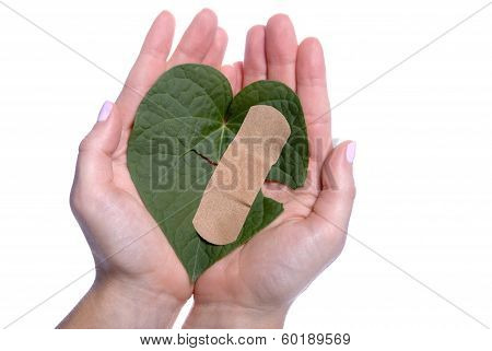 Heart Shaped Leaf Broken Bandaid Girls Hands