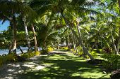 A green walking path at a south pacific tropical resort shows a shaded, grassy walkway to a local bu