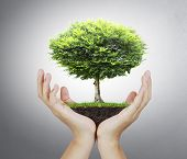 stock photo of nurture  - Small tree - JPG