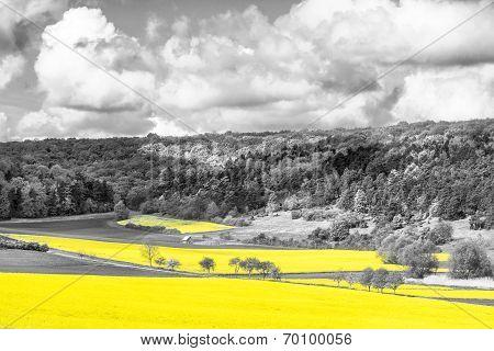 Oilseed Rape Fields