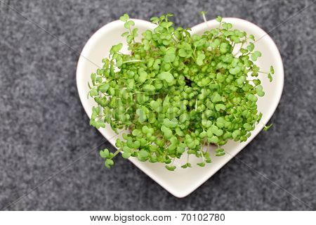 salad mustard cress