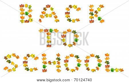 B A C K  T O  S C H O O L Text Composed Of Autumn Maple Leafs