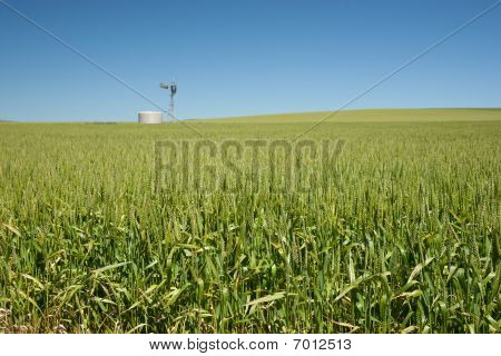 Farm Has Fields Of Wheat