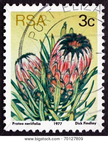 Postage Stamp South Africa 1977 Oleanderleaf Protea, Flowering P