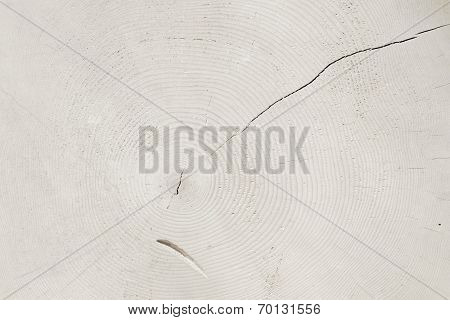 Tree Slice With Rings, White Toned Natural Background