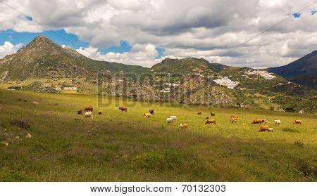 Pueblos Blancos near Casares, Andalusia, Spain