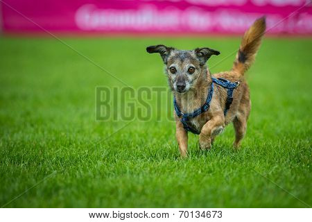 Small Mixed Breed Dog