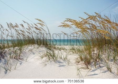 Sunny Ocean Beach Dunes With Sea Oats