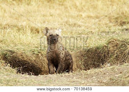 Masai Mara Baby Hyena
