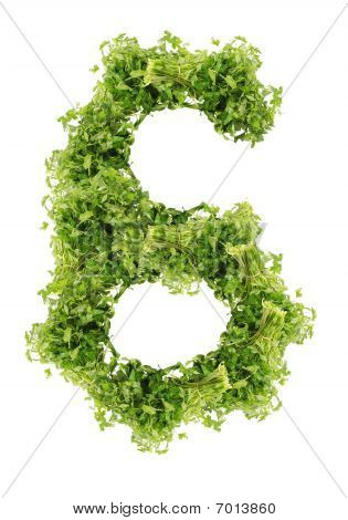 parsley six digits