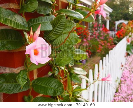 Flower Garden With White Picket Fence