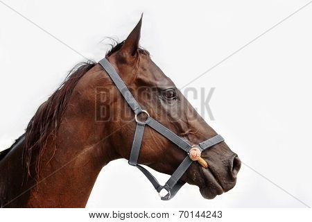 Close Up Head Of Horse With Mask Side View On Cloudy Background