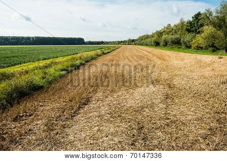 Large Stubble Field In Summertime