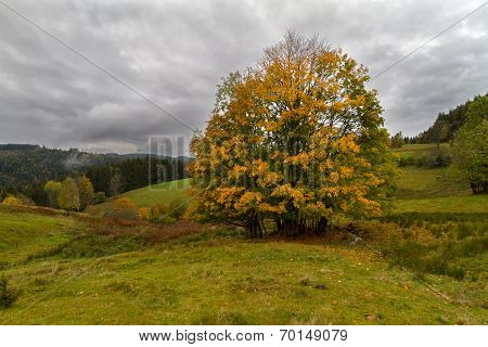 Single tree at autumn in Black Forest, Germany