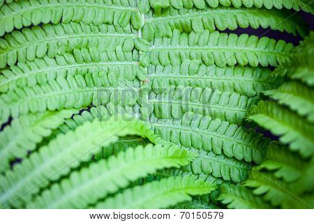 Closeup Of Green Fern Stem And Leaves