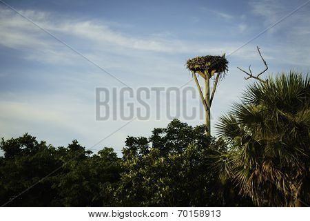 Bird Nest in Sanibel