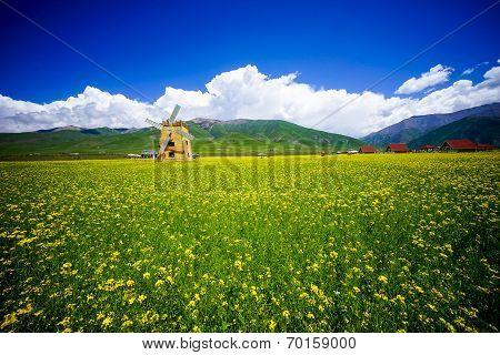 Rape flowers - million hectares of rape flowers beauty