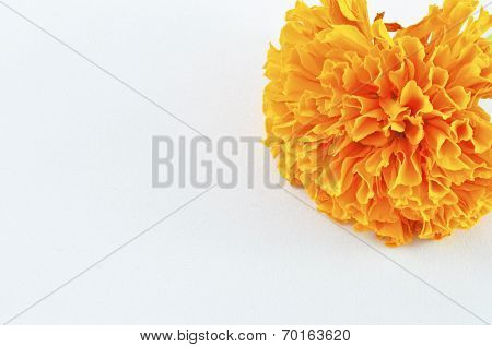 Orange Marigold (tagetes) Flower