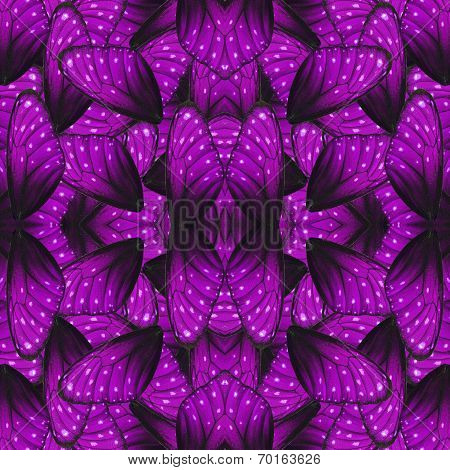 Great Purple Background Pattern Made Of Stripe Blue Butterfly's Wing Skin Texture