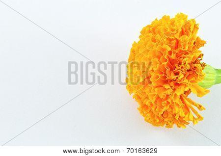 Orange Marigold (tagetes) Flower Isolated On White