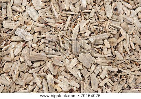 Eucalyptus Chip