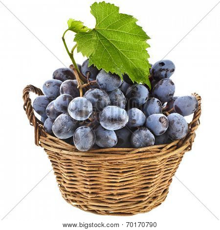 Ripe dark grapes in wicker basket isolated on white background