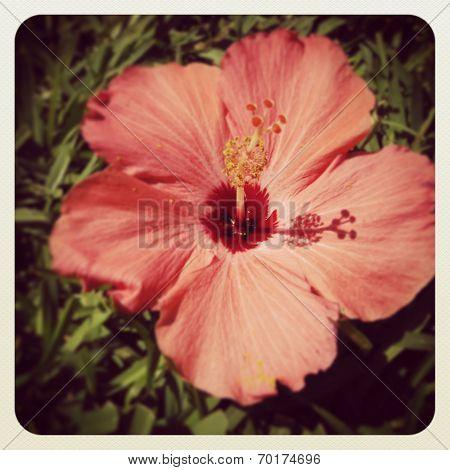 instagram of hibiscus flower closeup in tropical setting