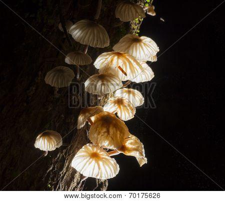 Fungi Mushroom With Wood On Black
