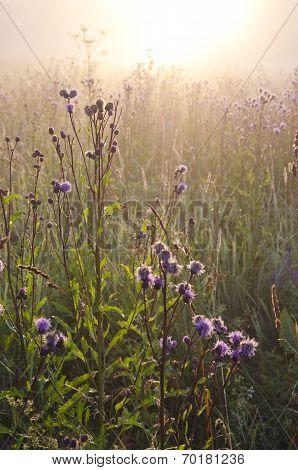 Dewy Beautiful Summer Morning Grass And Sunrise Sunlight