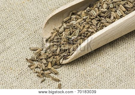 Dried fennel