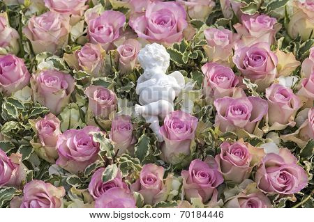 White angel on pink roses