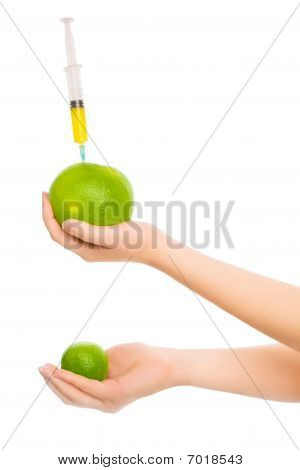 Woman's Hands With Two Citruses