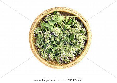 Fresh Medical Lemon-balm Flowers Herbs In Wooden Wicker Plate