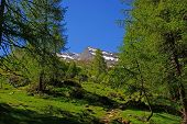 picture of south tyrol  - A narrow mountain path through the green mountain forest and in the background the snow - JPG