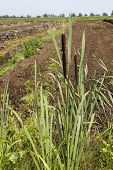 foto of monocots  - Some bullrushs and reed plants taken at the edge of a swamp - JPG