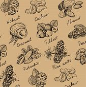 picture of pecan tree  - vector illustration of engraving nuts hands drawing - JPG