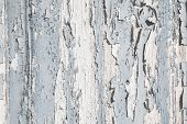 picture of shabby chic  - Old rustic blue and grey wood background with peeled color in shabby chic style. ** Note: Soft Focus at 100%, best at smaller sizes - JPG