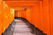 picture of inari  - Fushimi Inari Taisha Shrine in Kyoto Japan - JPG
