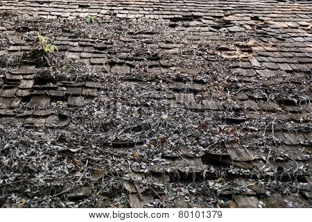 Old Teak Wood Top Roof