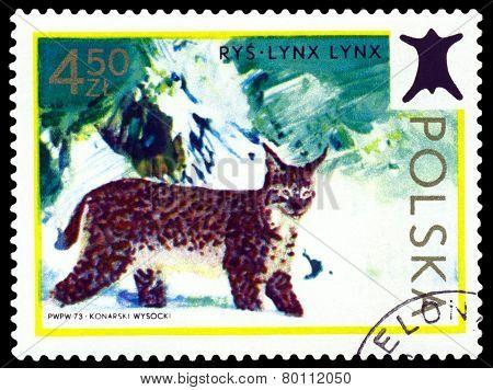 Vintage  Postage Stamp. Lynx.