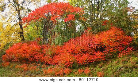 colorful trees and bushes