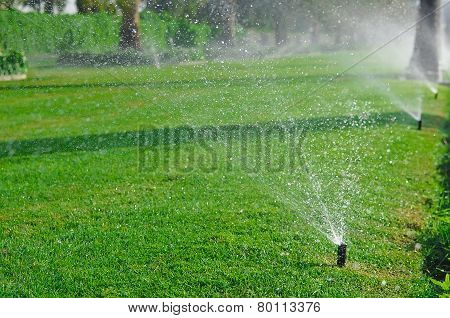 Sprinkler of automatic watering. Irrigation system.