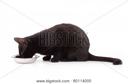 Pretty black cat eating out of a bowl, on white